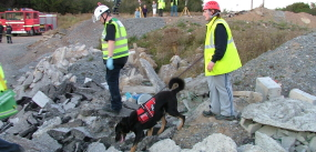 St John Ambulance and Search and Rescue Dog Association